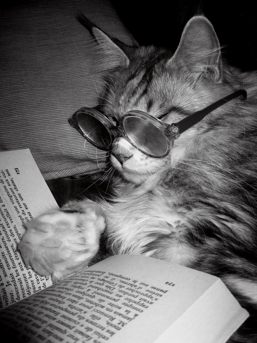 Smart cat by bueyedgirl