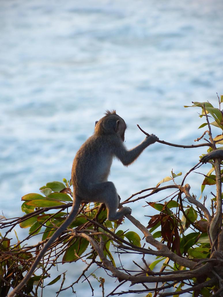 Dreamy monkey by bueyedgirl