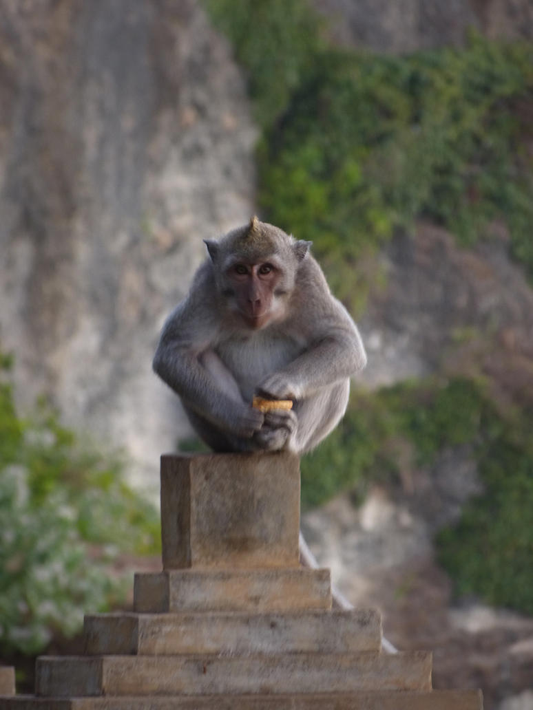 Mischievous monkey by bueyedgirl