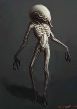 Protomorph