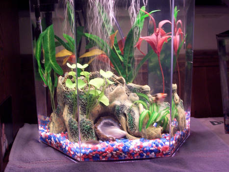 The tank of my fish