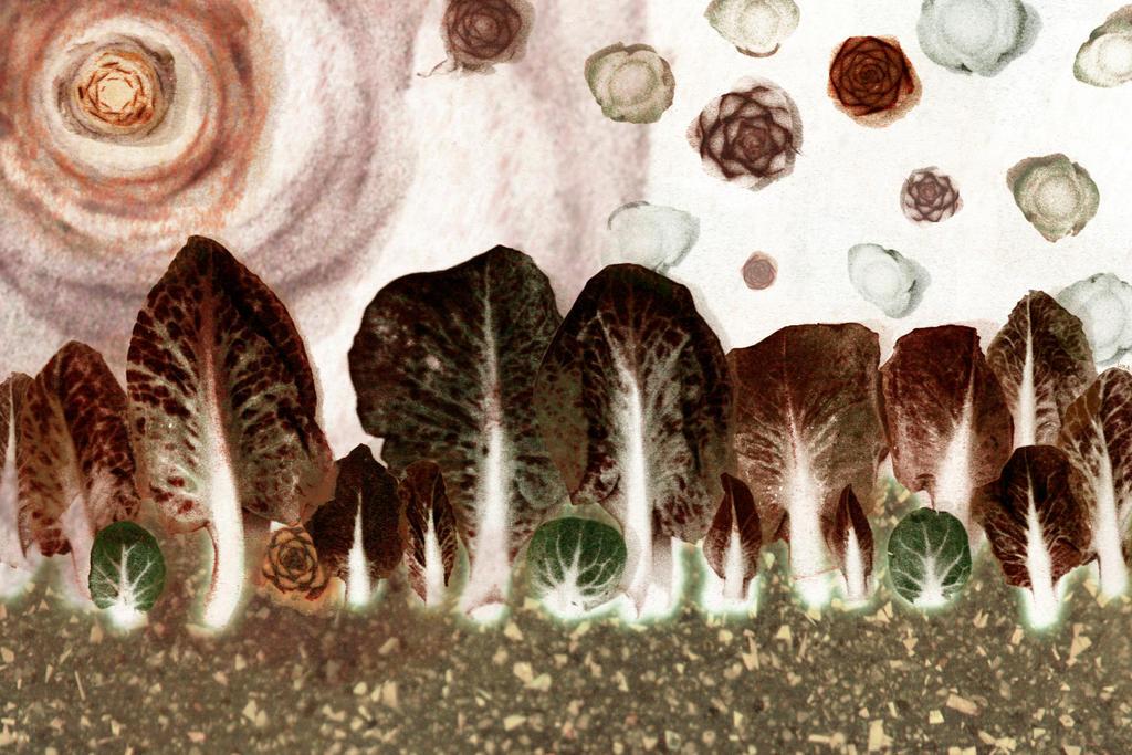 lettuce by Mjesec