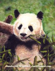 Panda Gouache by SpookyChan