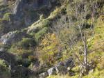 Fall cliffside