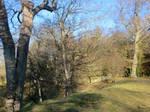 Marl Hall trees