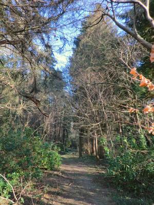 Woodland path by MakinMagic