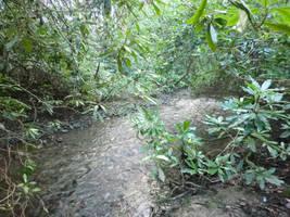 Babbling brook by MakinMagic