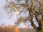 Rainbow (right)
