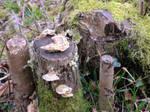 Funghi and lichen