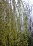 Branch lines 7