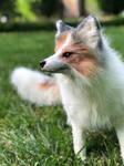 Sun glow Fox (poseable art doll)