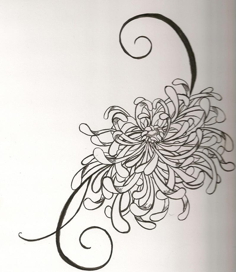 japanese chrysanthemum by vivalldi on deviantart. Black Bedroom Furniture Sets. Home Design Ideas