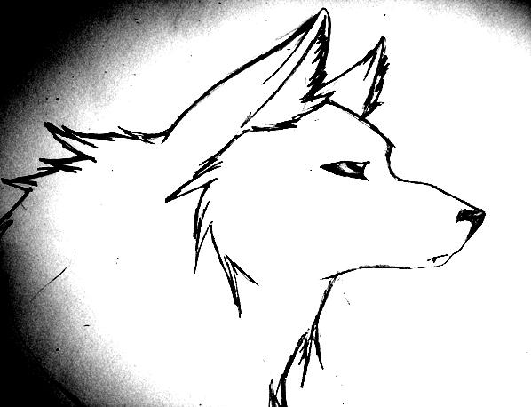 Quick Wolf Drawing by xXCrazyxXxPancakeXx on DeviantArt