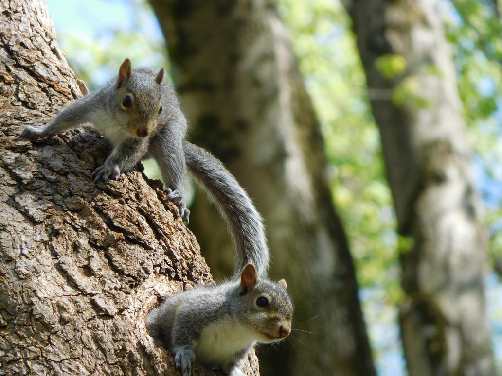 Curious Young Squirrels by Zoruaofepic