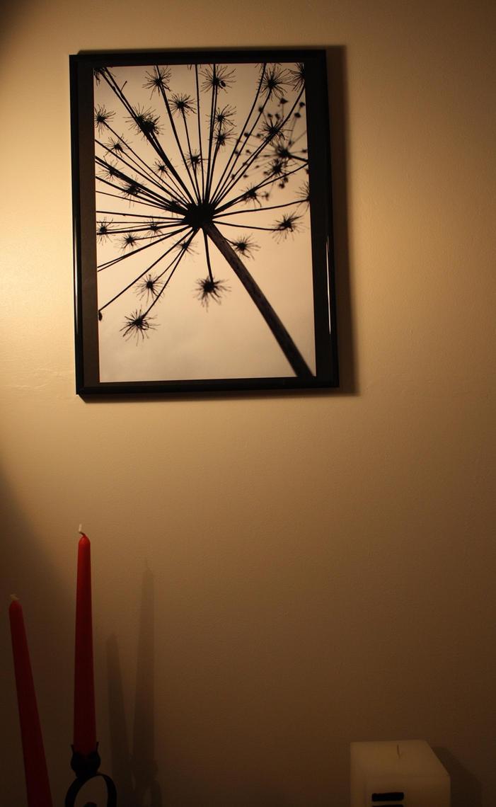 Black Star Print by Xerces