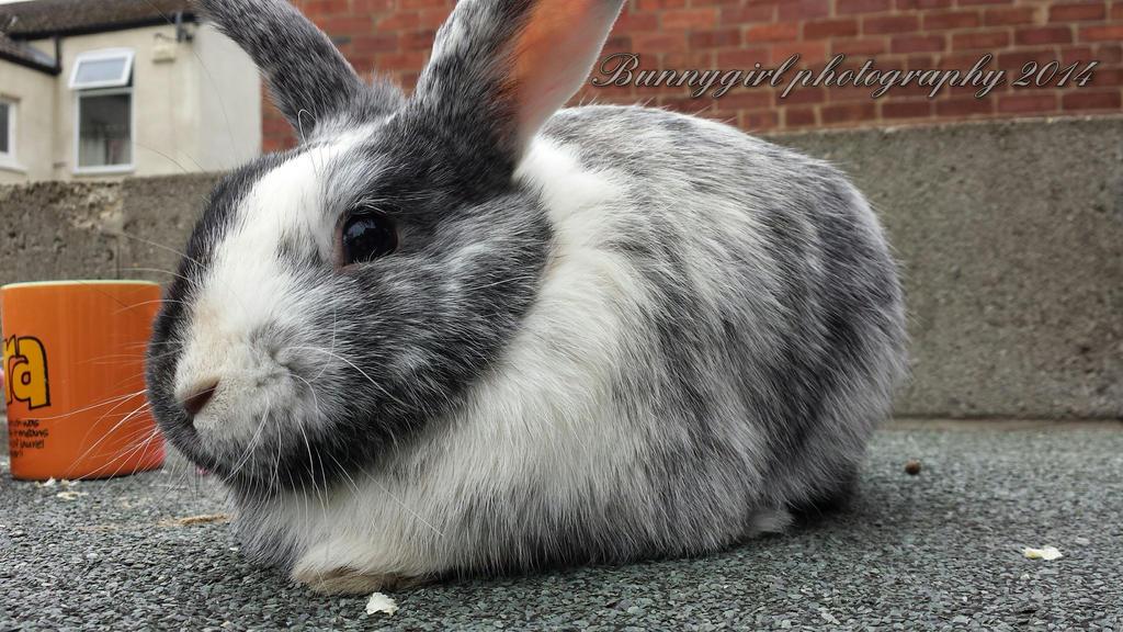Harvey  by Bunnygirlphotography