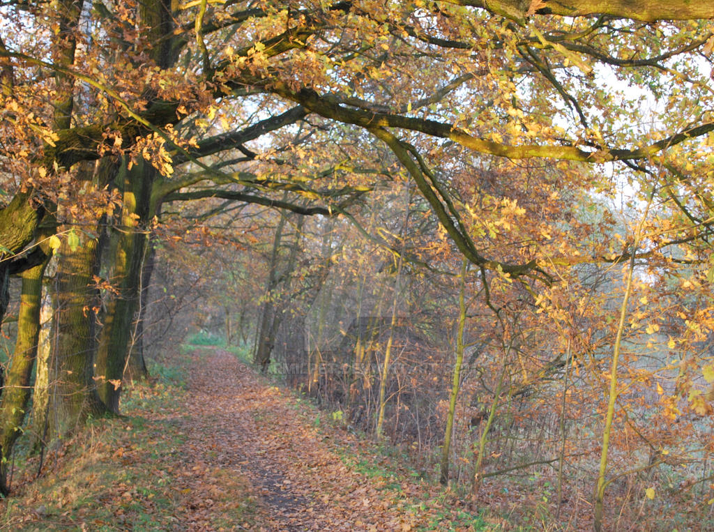 Autumn colours by Jarmilpet