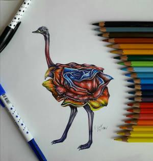 Rose ostrich