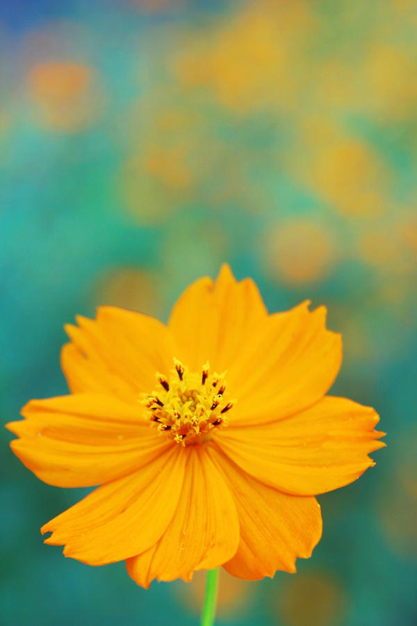 Fall Cosmos - 01 Take 2 by caffinefreek
