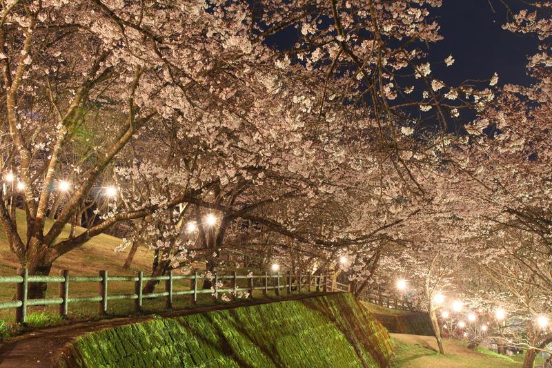 Japanese Spring 2015 - 31 by caffinefreek
