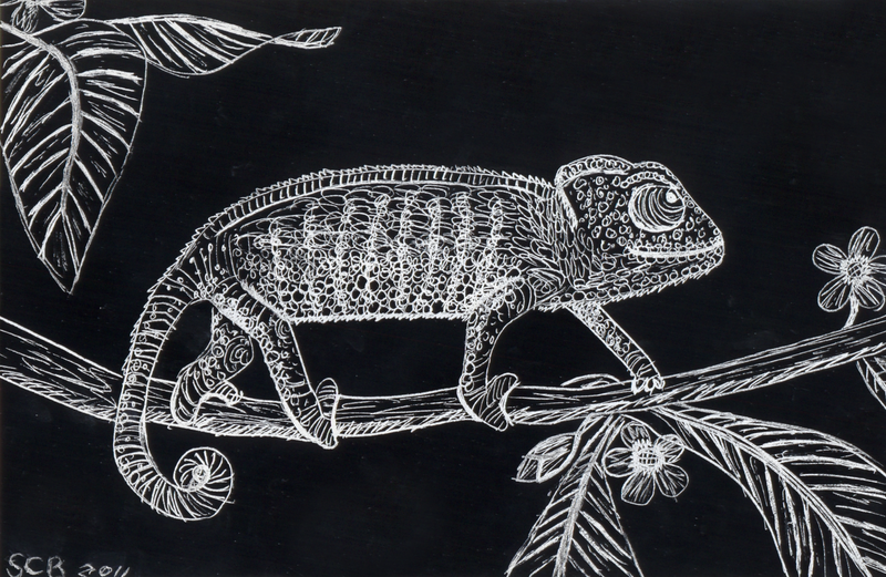Scratchboard Study Reptiles By Ravenclawyoshi