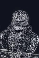Scratchboard Study: Birds -Owl by ravenclawyoshi