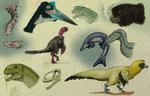 Paleo-Sketches 5