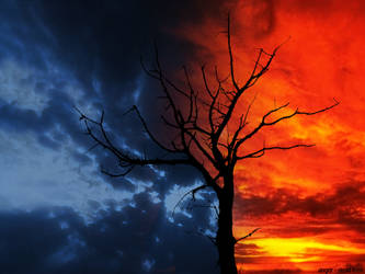 Dead Tree by aNgr