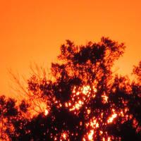 Tangerine Sky Sunset