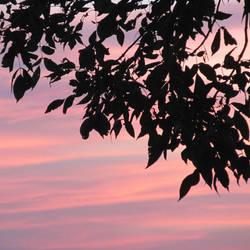 Leaves Against Pastel Backdrop