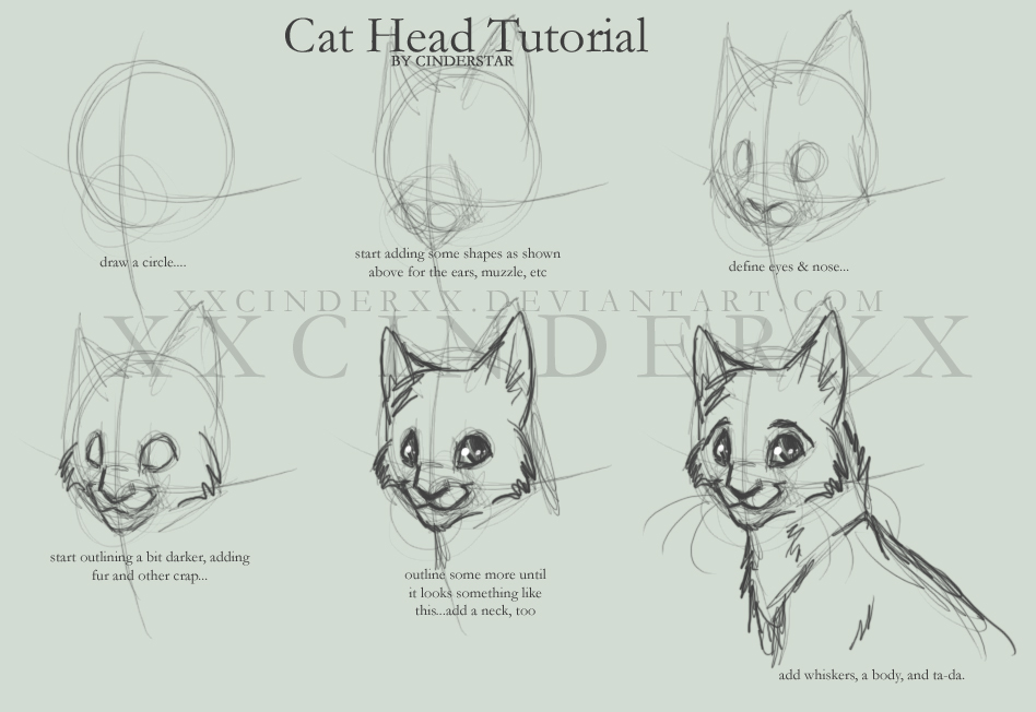 Cat anatomy drawing