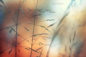 a summer beneath the trees by sumarlegur