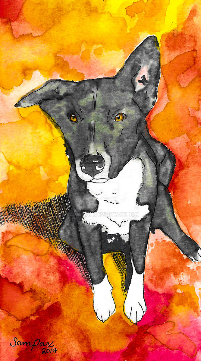 Zeke - Dog Doodles by Saphiirah