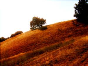 Little Tree On The Prairie
