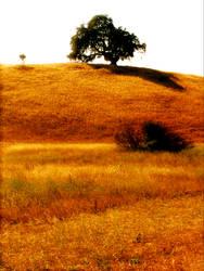 Little Tree On The Prairie 2