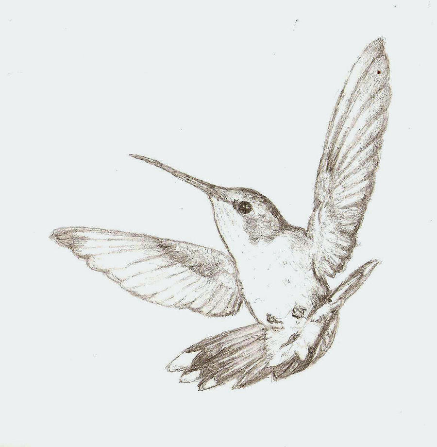 hummingbird sketch by colorado-sparrow on DeviantArt