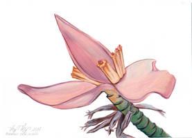 Flor-bananeira