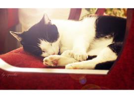 Kissa by ziperka