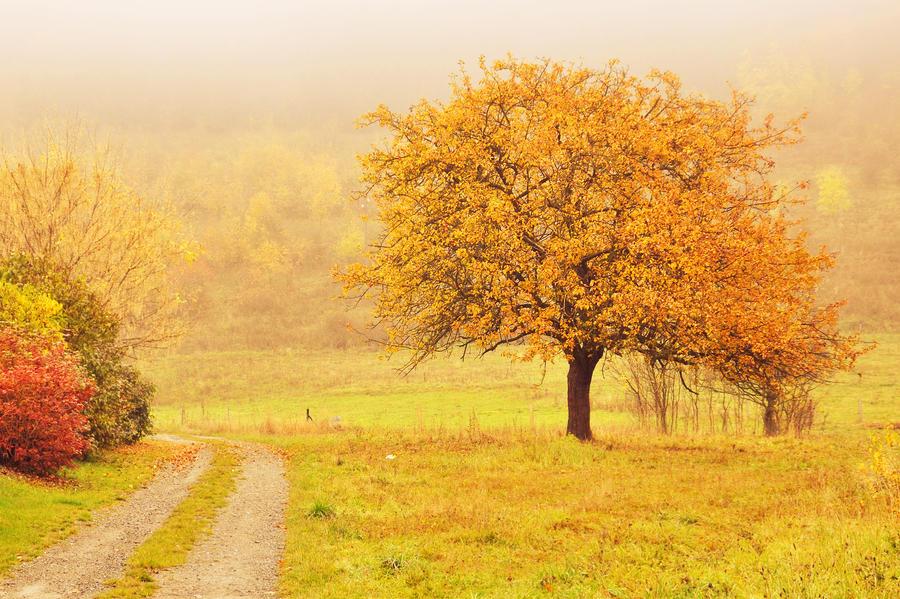 Autumn 2013 by ziperka