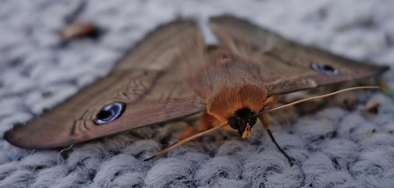 Warm Moth by MatureContntFilterOn