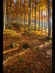Autumn trees of Slovenia