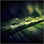 Drops by CasheeFoo
