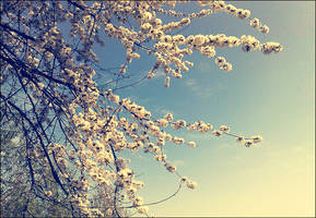 Save Spring by CasheeFoo