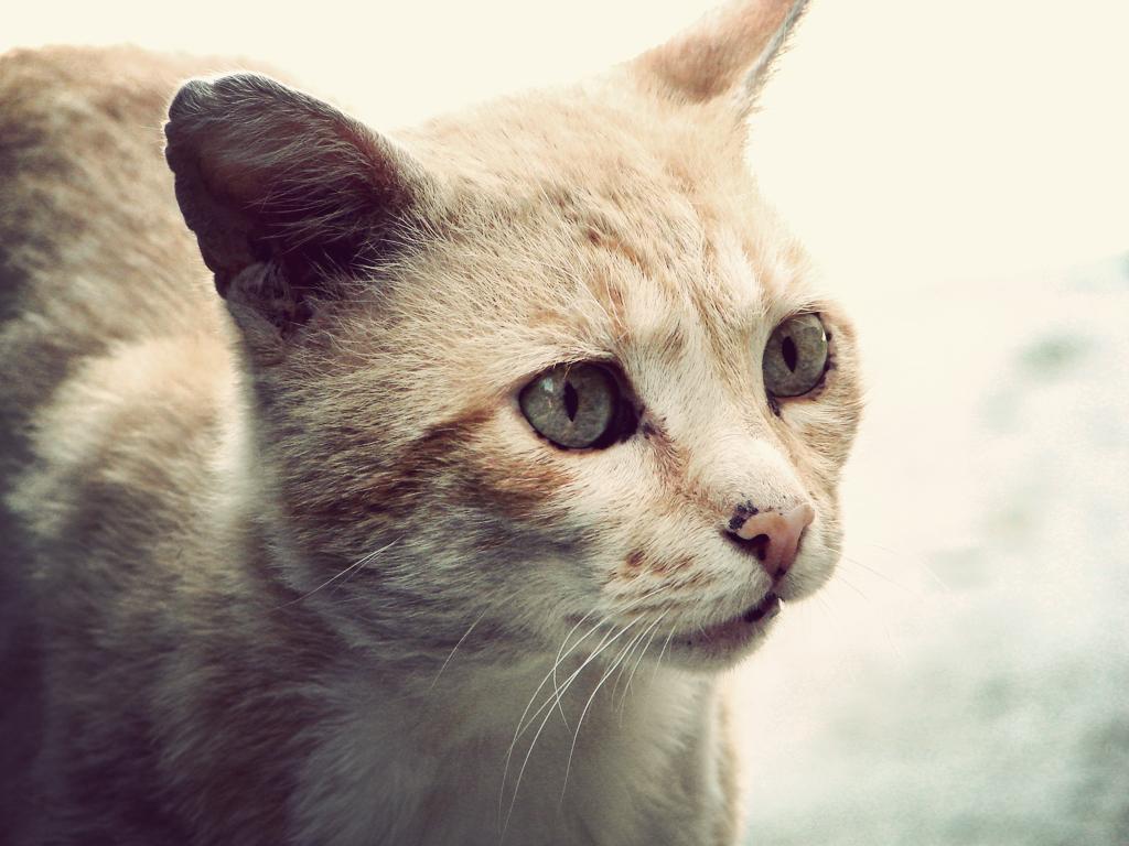Cat by CasheeFoo