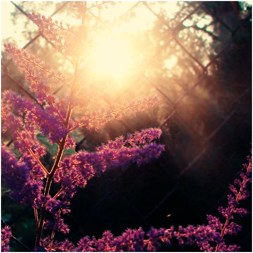 Sunset Flower... by CasheeFoo