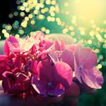 Just Shine