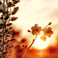 In Sun again by CasheeFoo