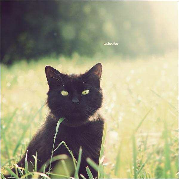 Back in Black by CasheeFoo