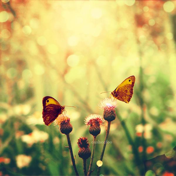 Butterflies by CasheeFoo