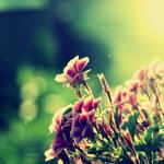Unknown flowers by CasheeFoo